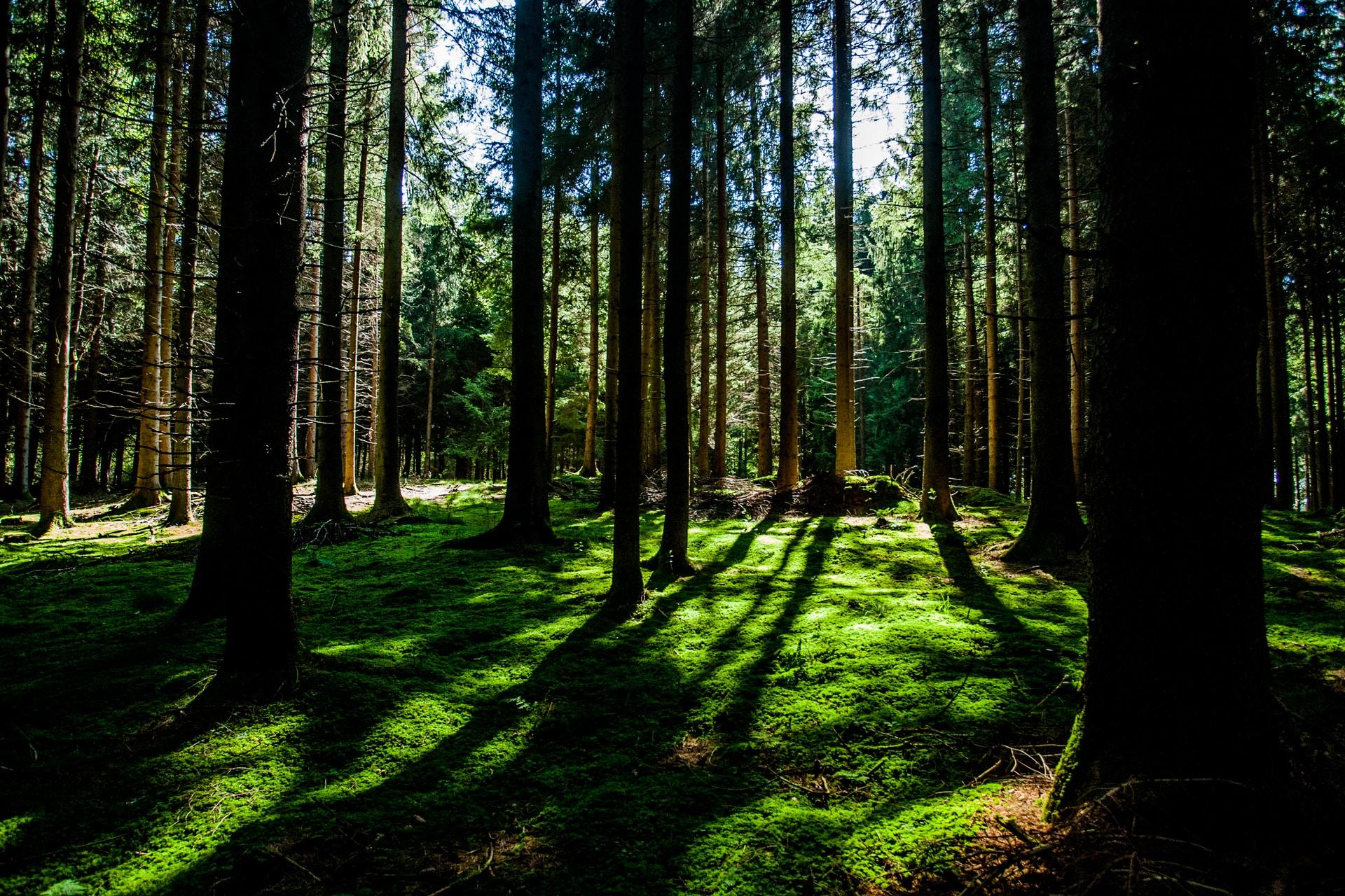 Metsä-fiiliskuva